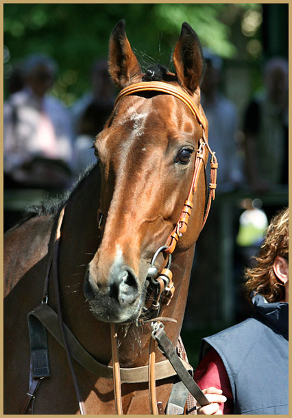Portrait des Galopper des Jahres 2006 - Prince Flori